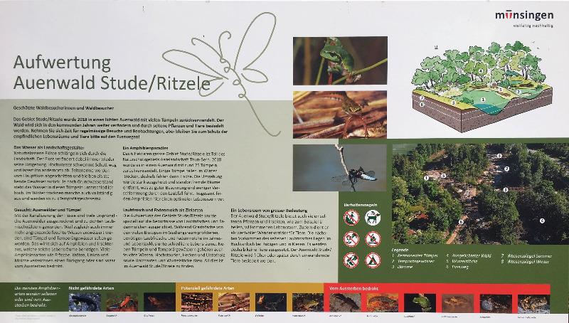 Stude_Ritzele.jpg