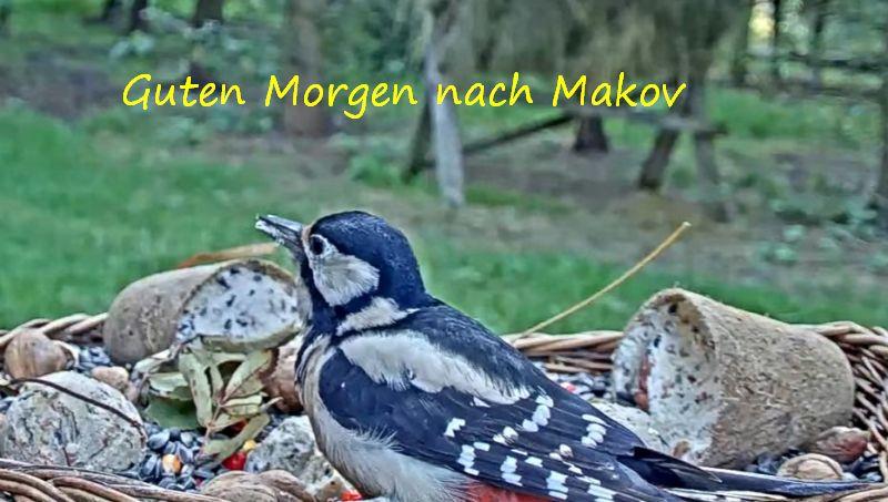 Makov9.10_2021-10-09.jpg