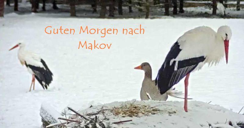 Makovweiss10.1.jpg