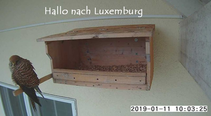 TFLux.11.1.jpg