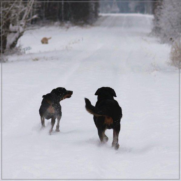 winterfreuden1.jpg